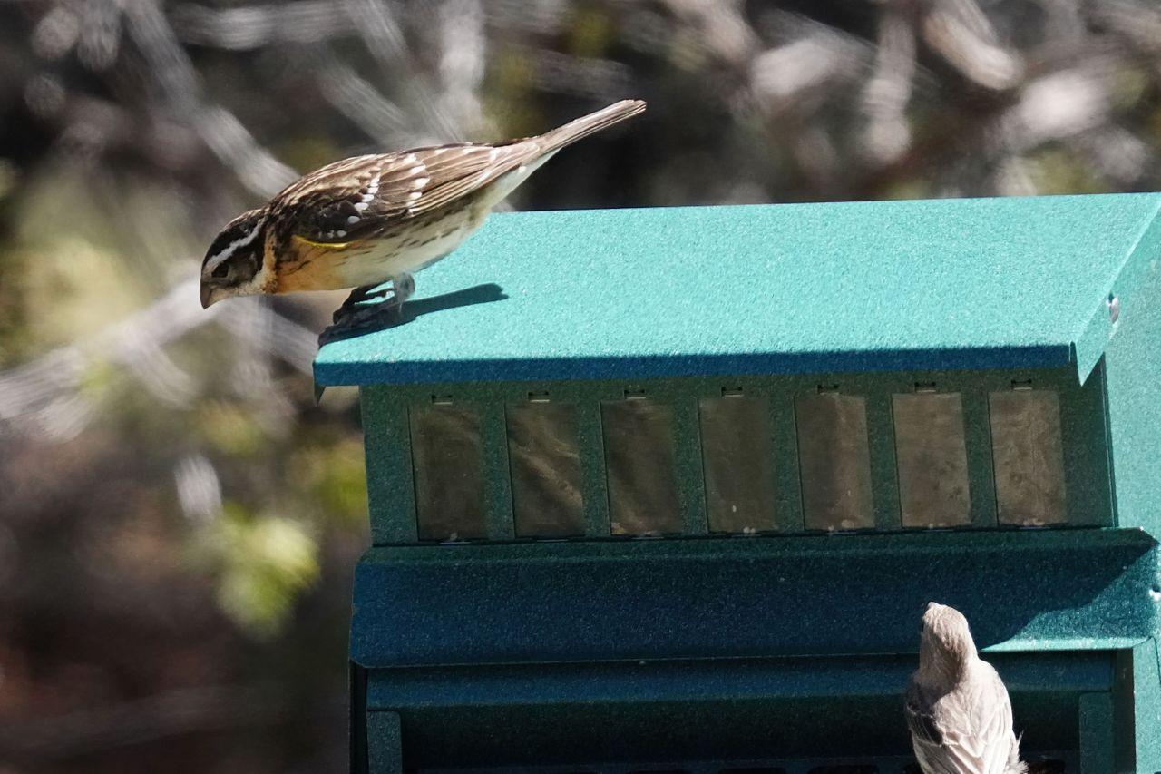 K-Birdfeeder-687.jpg