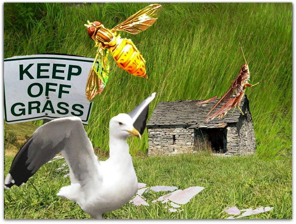 grass final cut.jpg