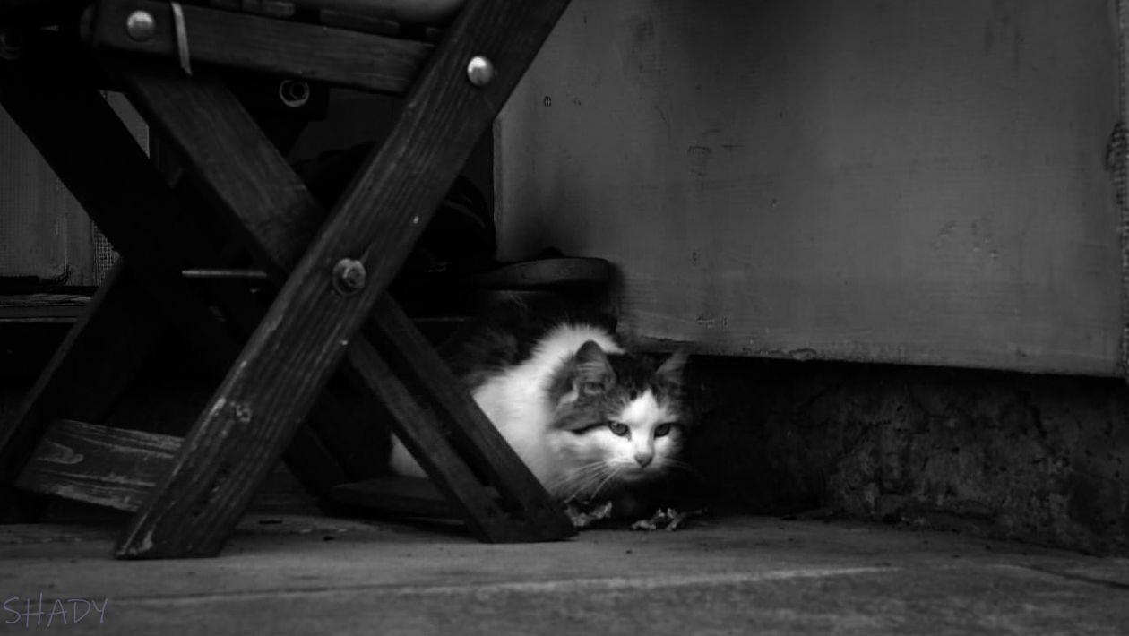 монохромні коти 3.jpg