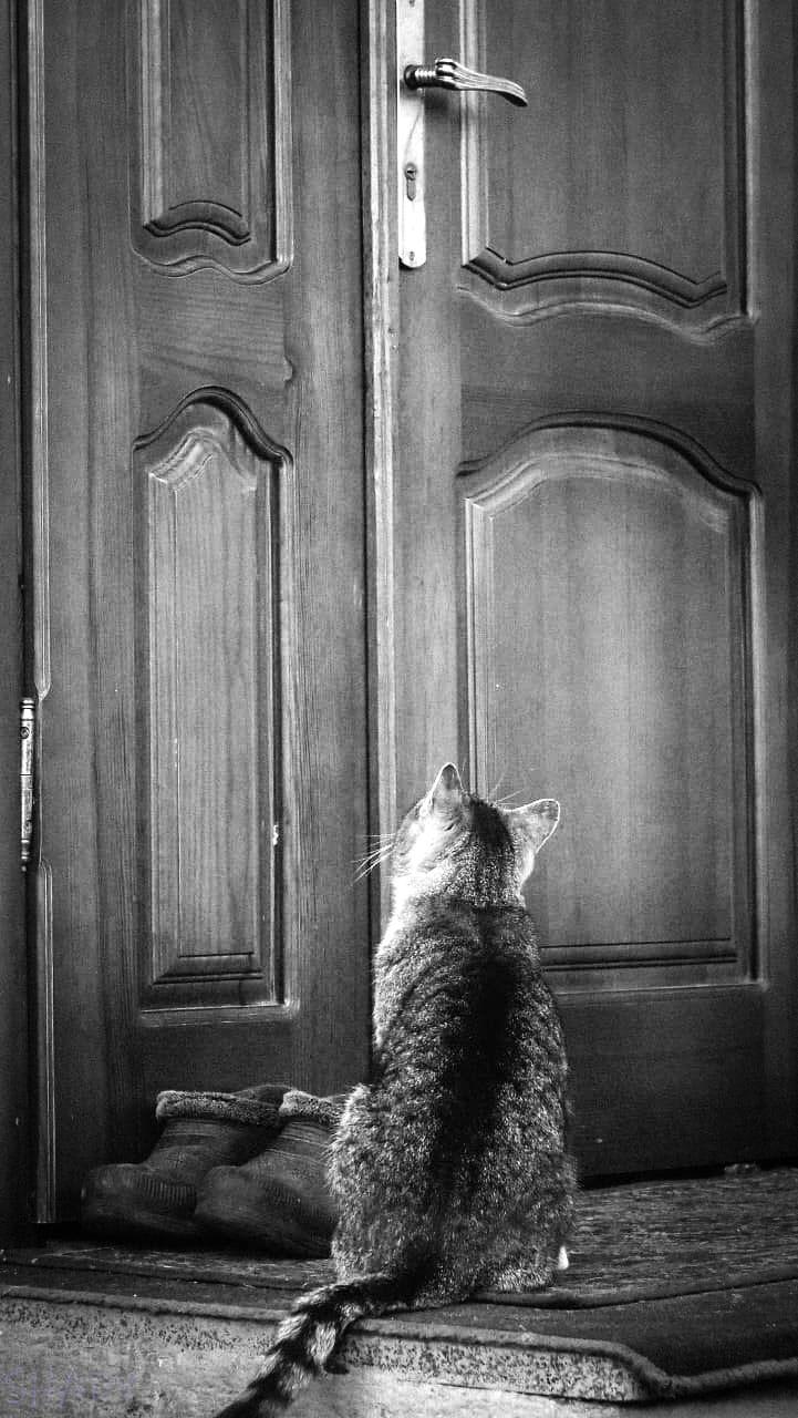 монохромні коти 4.jpg