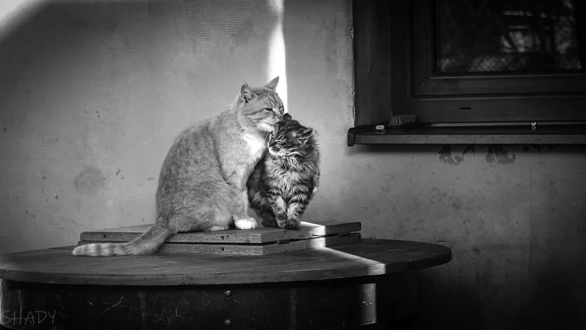 монохромні коти 1.jpg