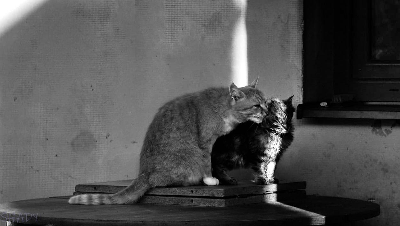 монохромні коти 2.jpg