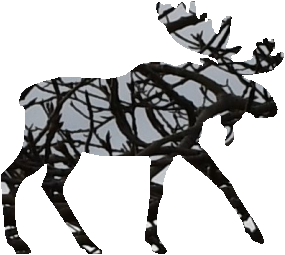 shasta2021sept24th47mymoose804io.png
