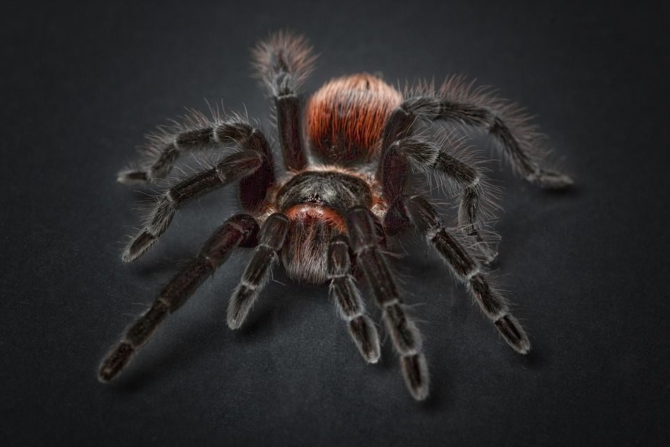 spider-1772769_960_720.jpg