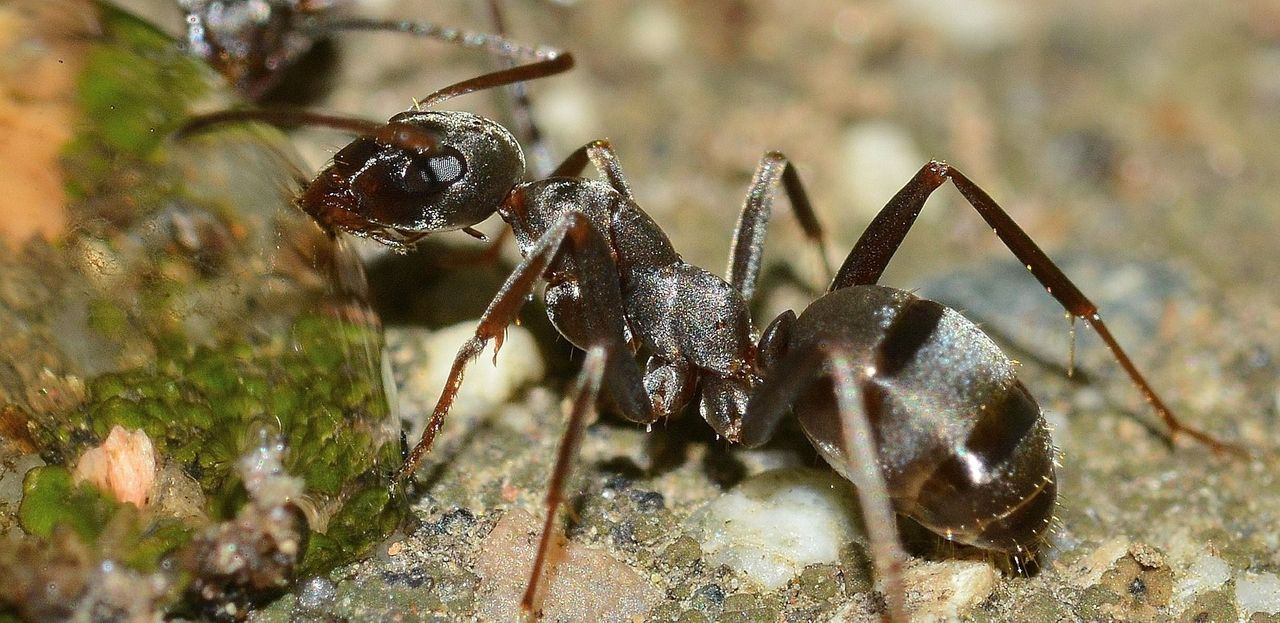 insects-566408_1920.jpg