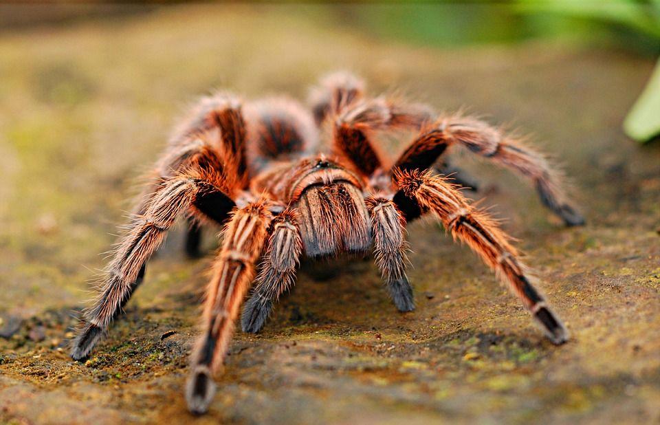 spider-2740997_960_720.jpg