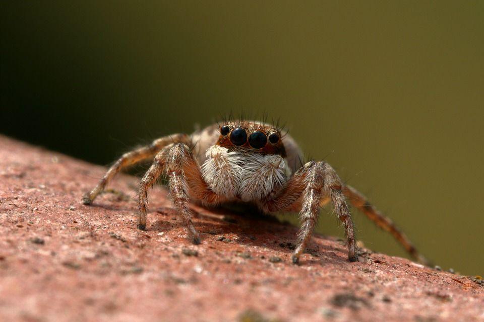 spider-5320486_960_720.jpg
