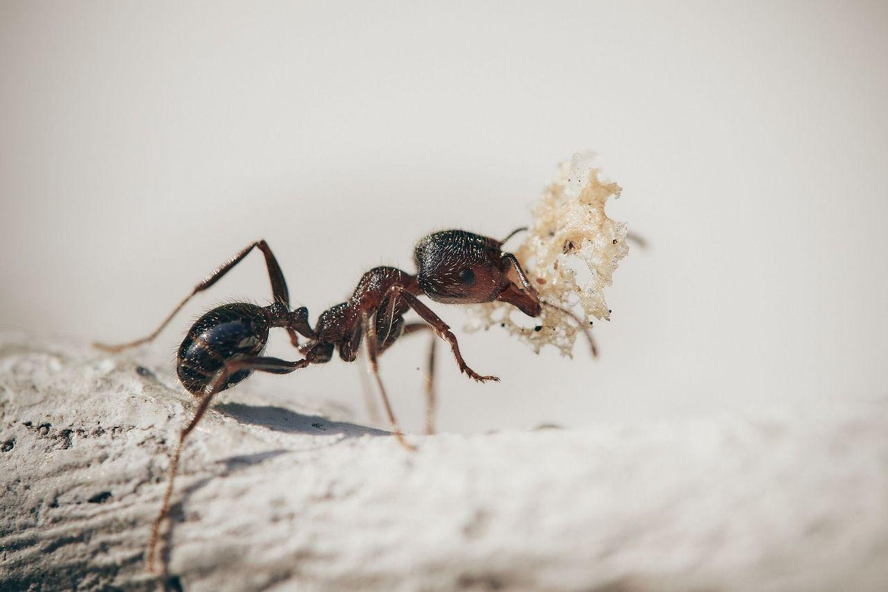 ants-5061910_1920.jpg