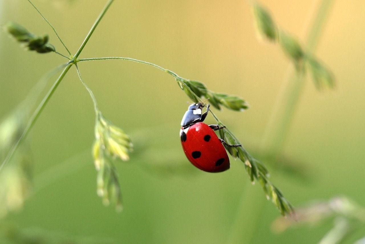 ladybug-1480102_1280.jpg
