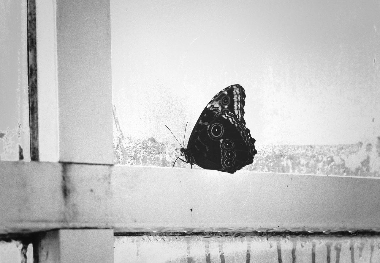 metulj skozi okno-2.jpg