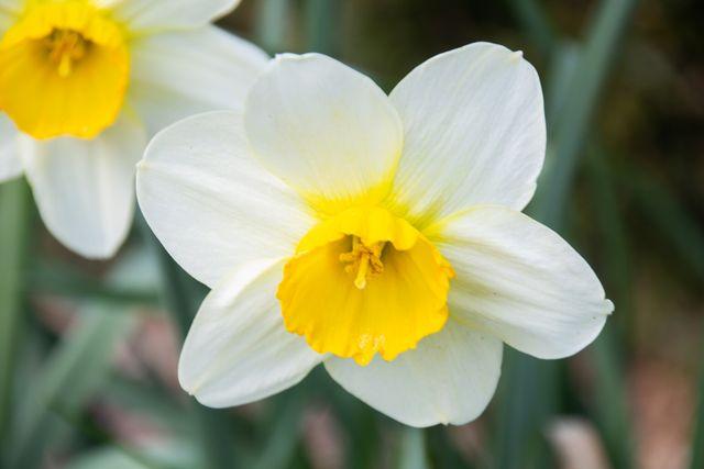 Some photos of my garden during spring time.