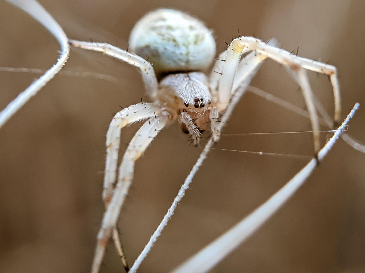 spider (11).jpg