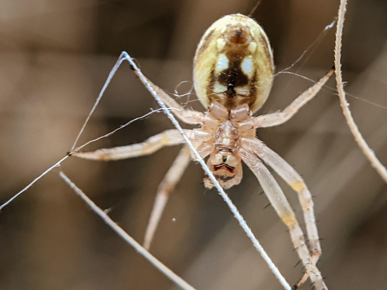 spider (13).jpg