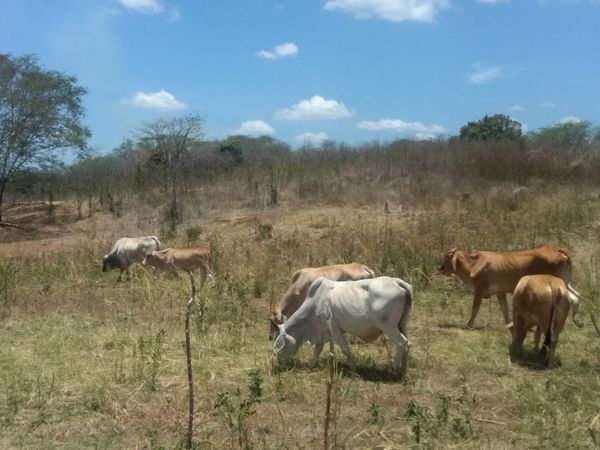[Esp/Eng] Visitando el Campo de mi Padre //Visiting my Father's Field