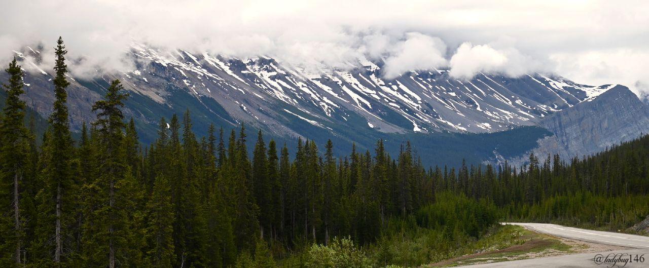 icefield parkway (9).jpg