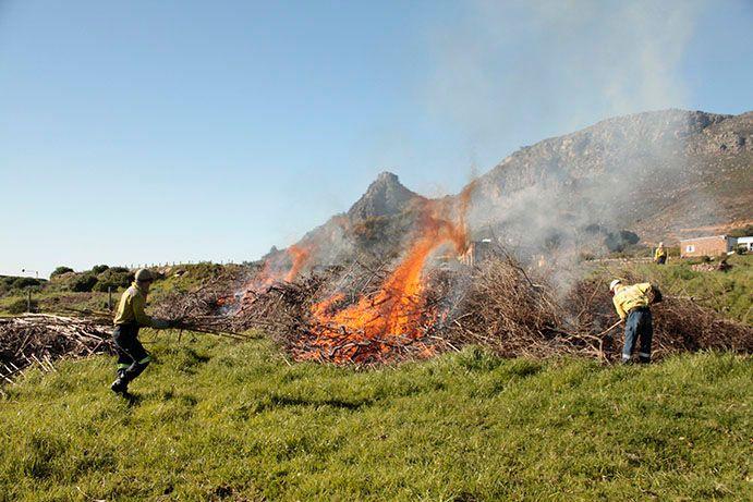 Brushpile burning.jpg