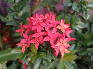 Flores rojas / Red flowers