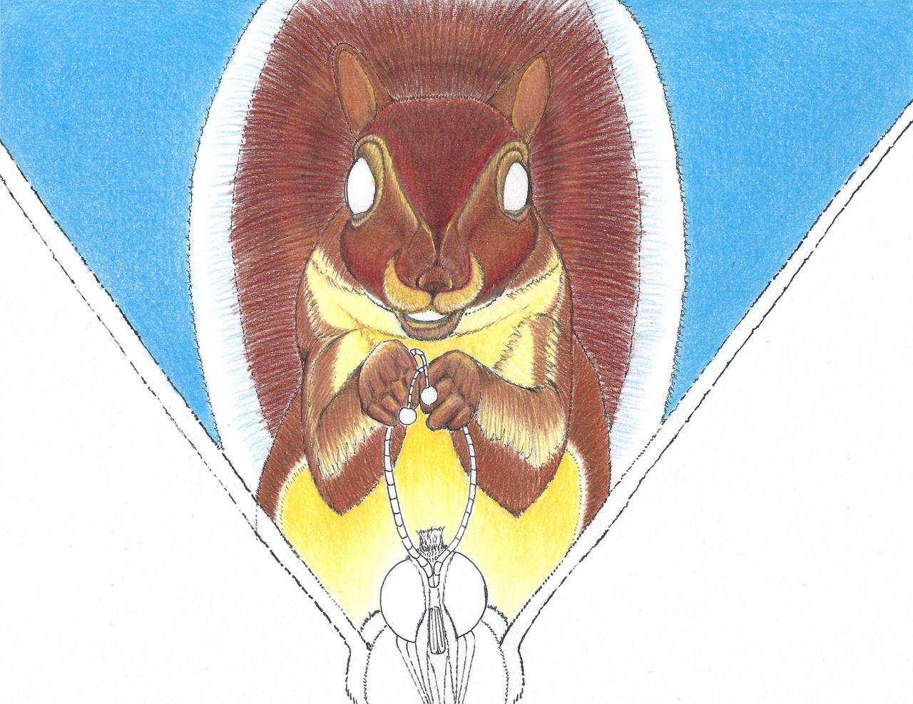 Squirrel 7b.jpg