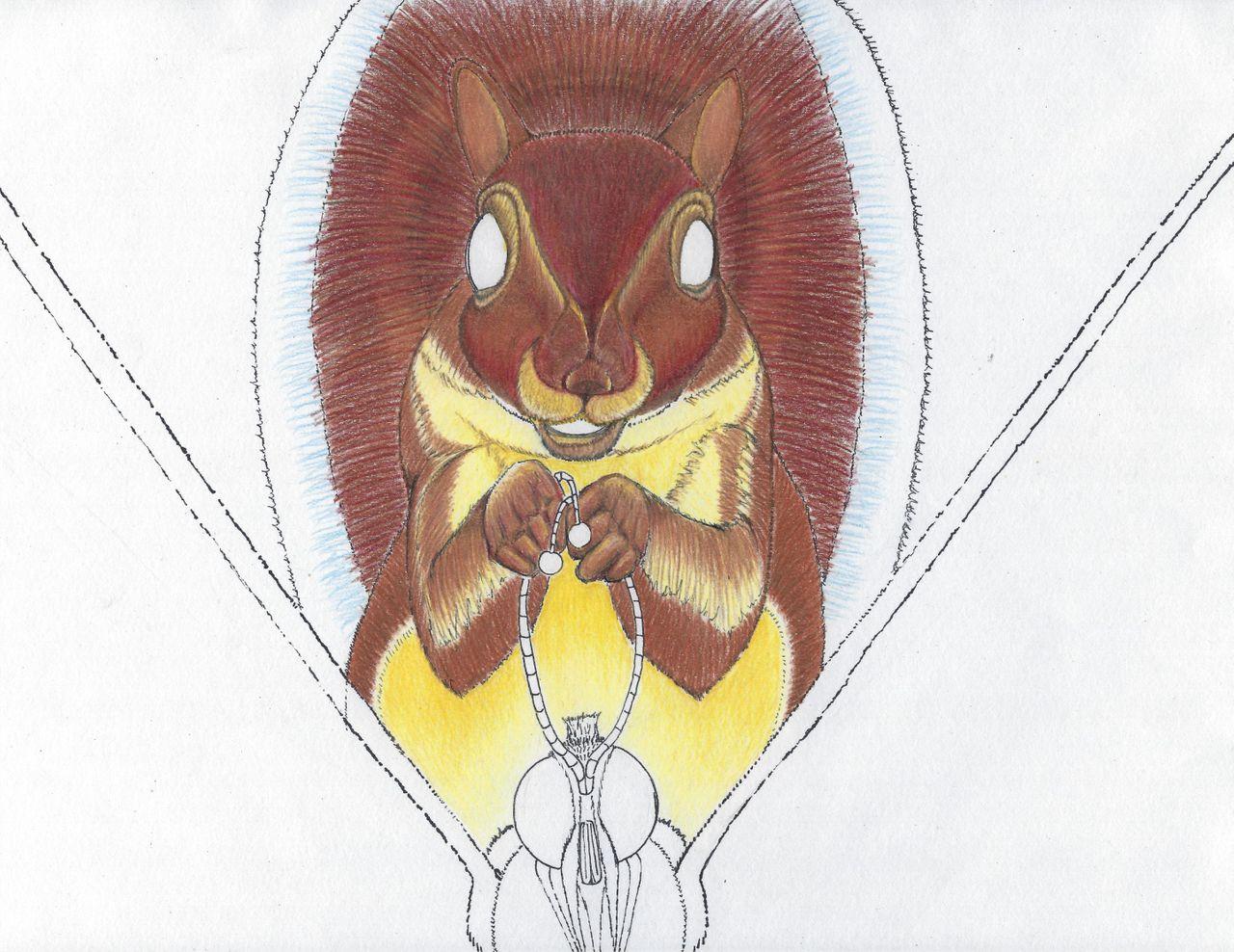 Squirrel 5b.jpg