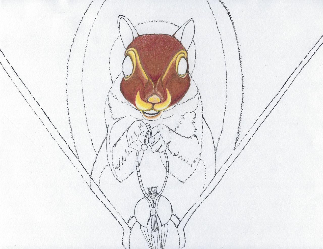 squirrel 2b.jpg
