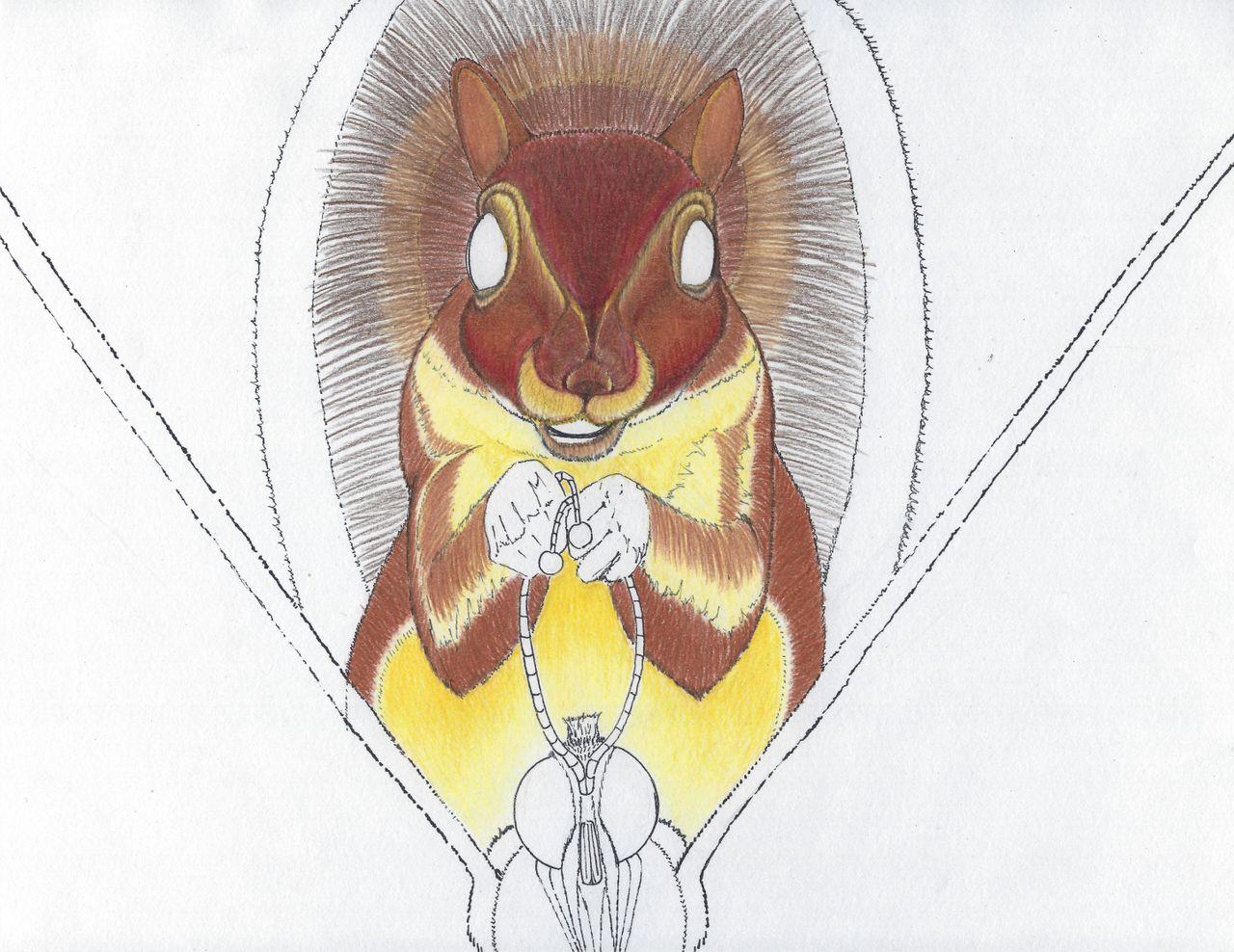 squirrel 4b.jpg