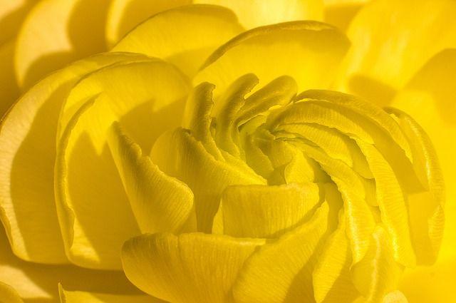 flower-4750726_640.jpg