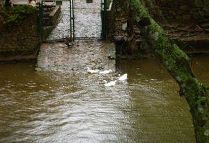 Ducks in the lagoon.
