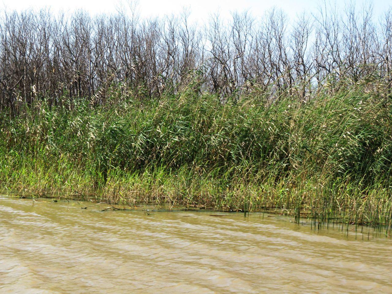3001-Mangroves.JPG