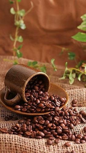 Qurator's Monday Missions | Coffee! / Misiones del lunes de Qurator | ¡Café!