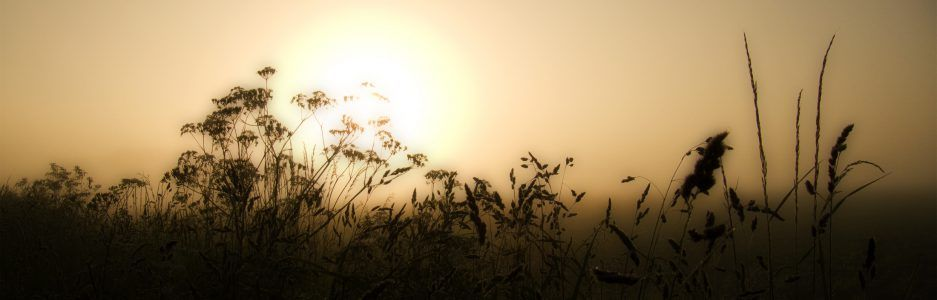 Header sunrise