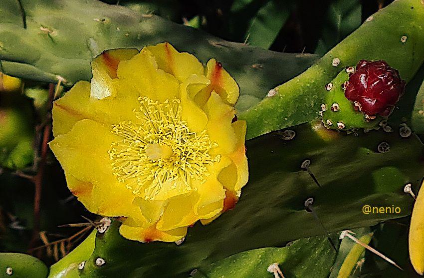 cactus-flower-01.jpg