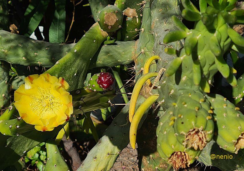cactus-flower-02.jpg