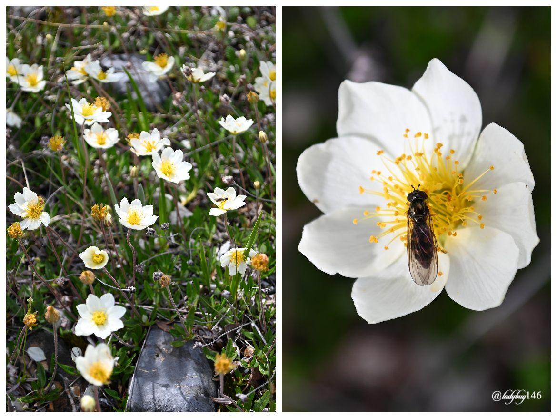 jasper flowers.jpg