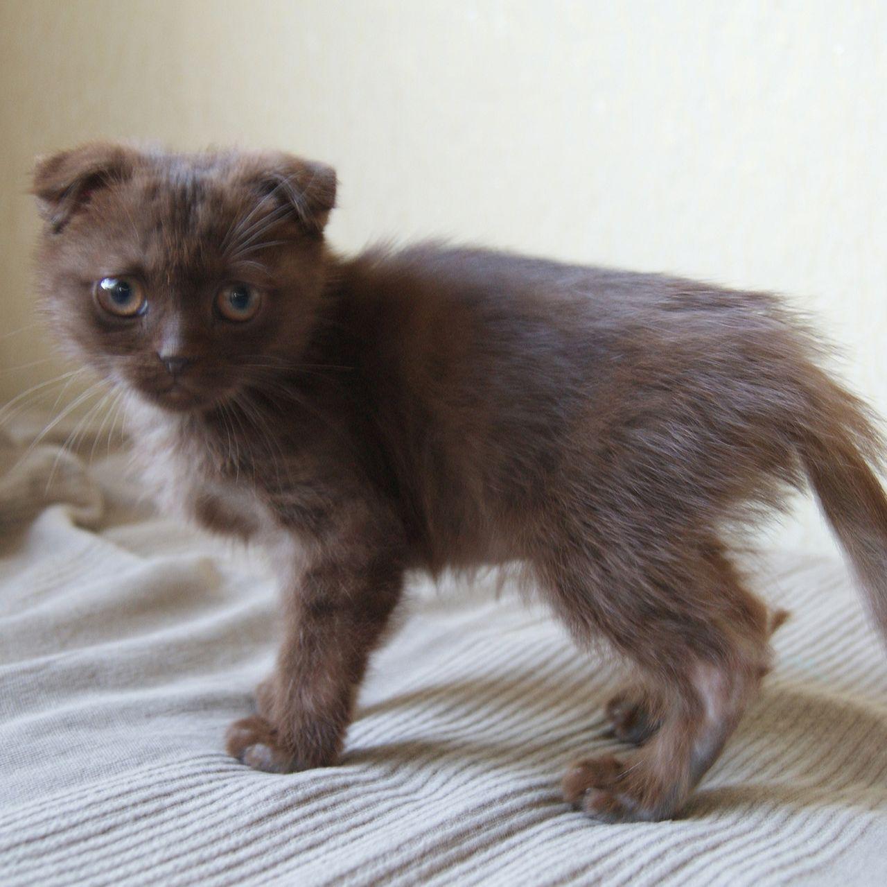 кошка худвя.jpg