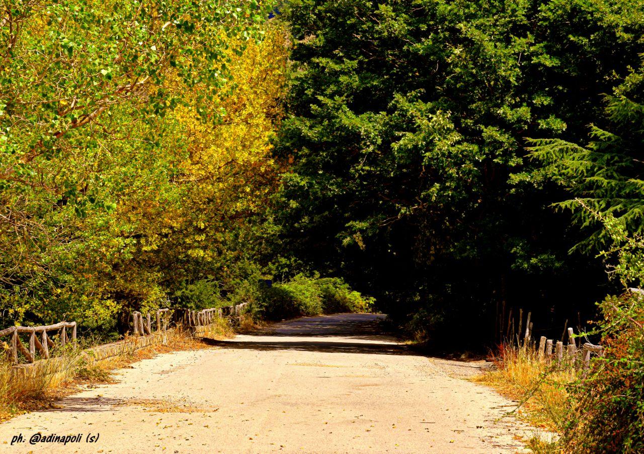 alberi_stradamontana_copia.jpg