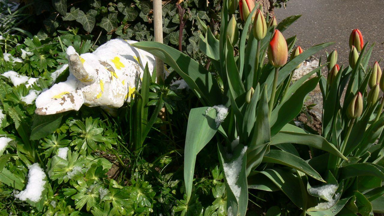 gartenblumen_im_schnee_15_.jpg