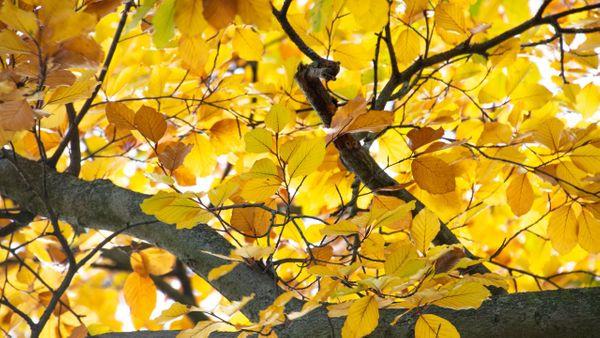 Photography : a little autumn walk.
