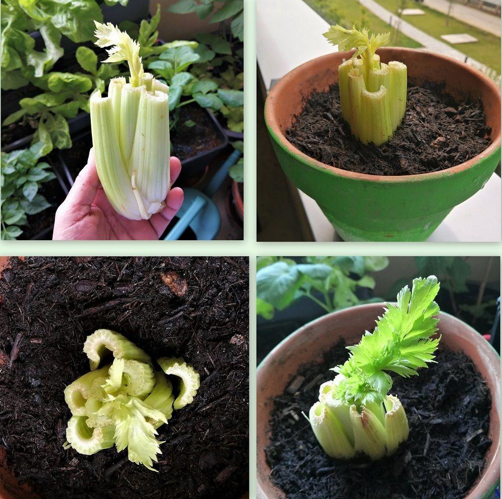 GardenJournal Nat.Medicine  8.71.jpg
