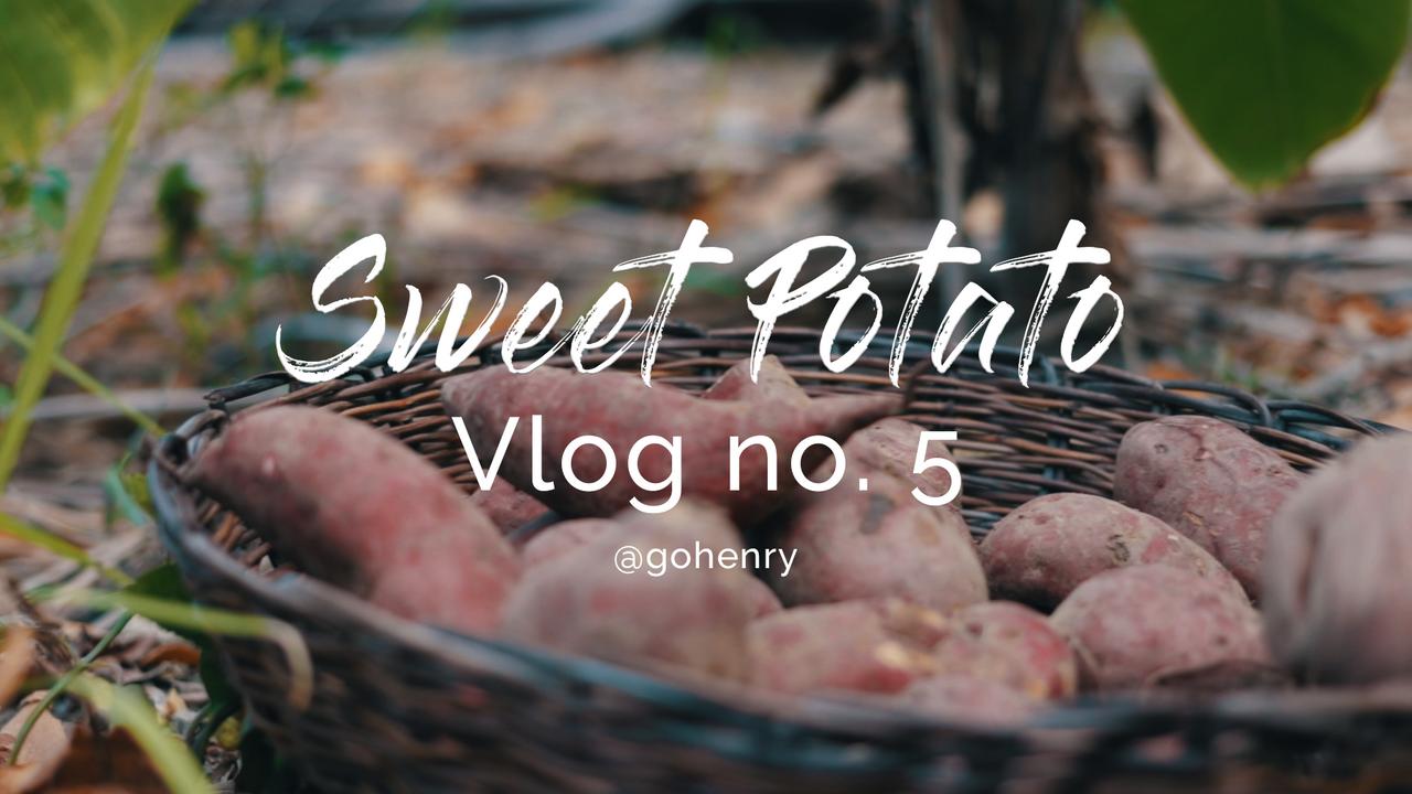 Sweet Potato.png