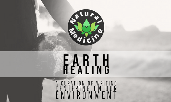 EARTH HEALING #19: Turtle Hatchlings, Beech, Endangered Penguins, Recycling Surprises... All Wrapped in NOT Plastic!