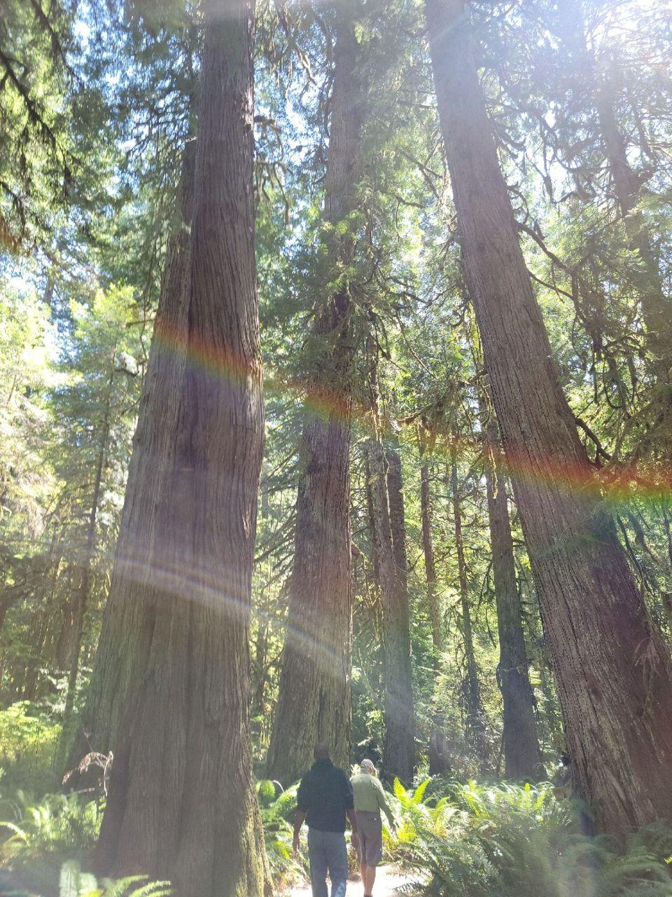 walking the path w rainbow.jpg