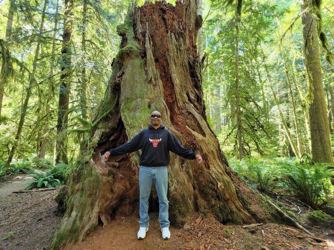 stump from huge old tree.jpg