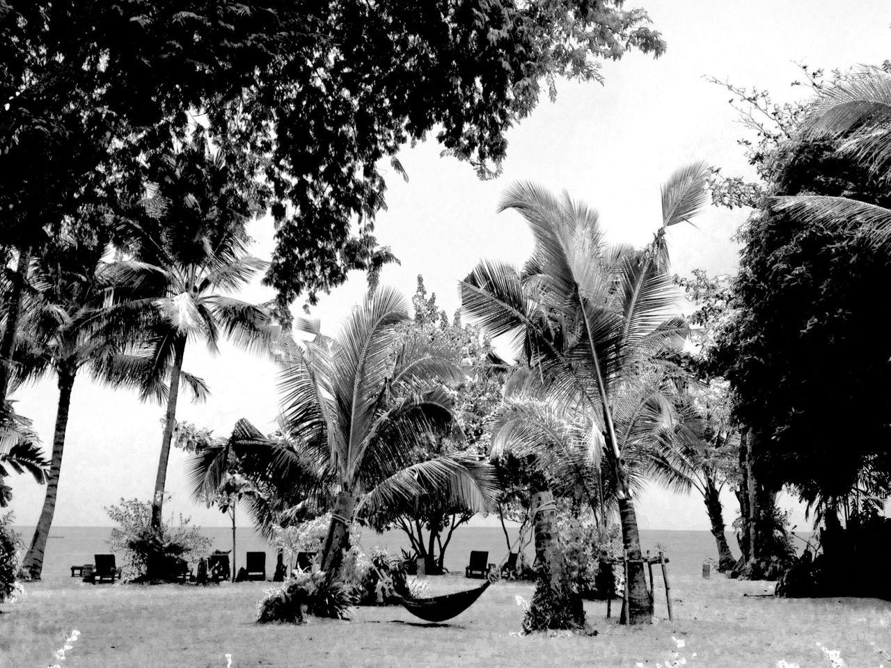 Thai palms2.png