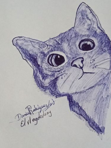 Drawing curious cat