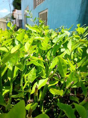 plantas verde / green plants