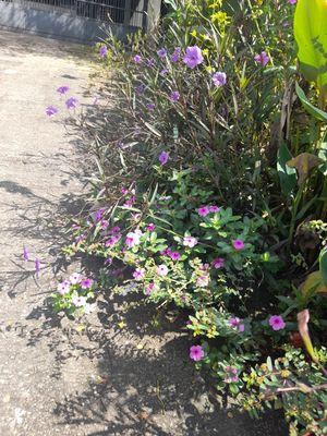 flor morada /  purple flower