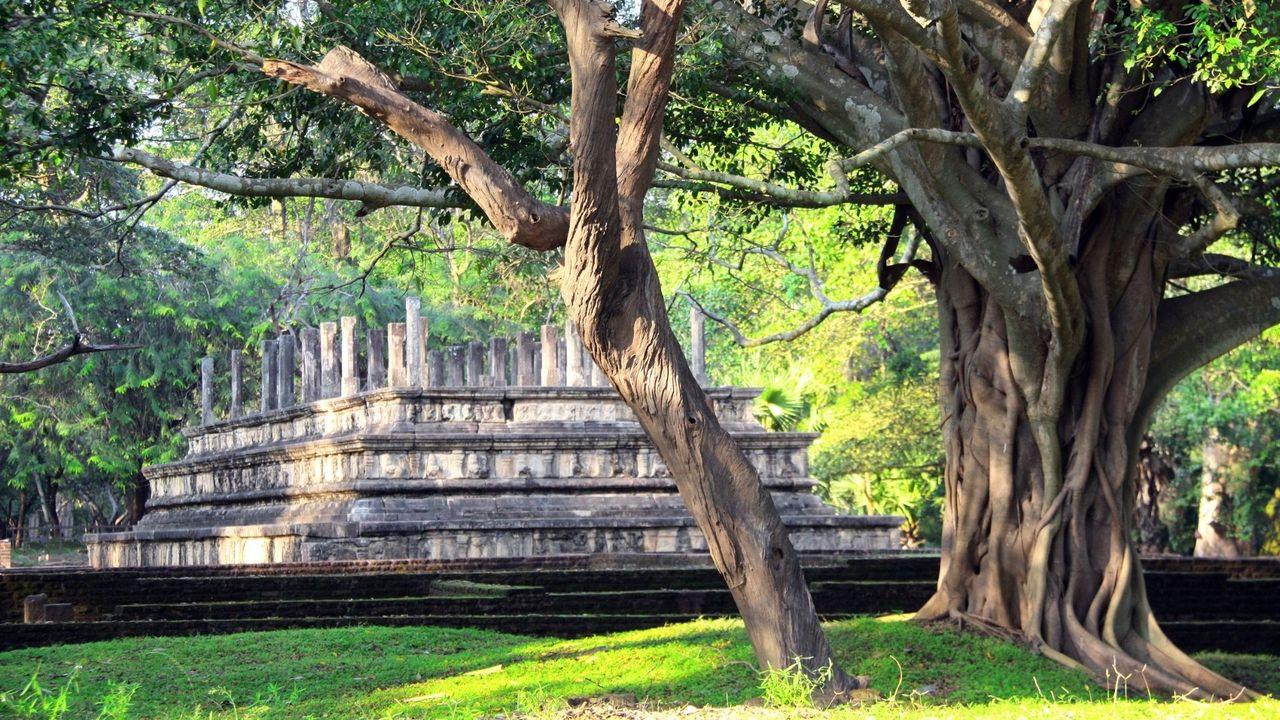 Sinhalese.jpg