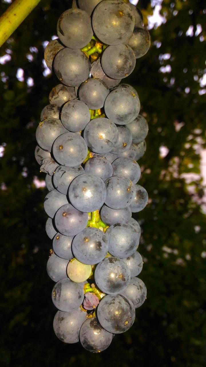 fruit12.jpg