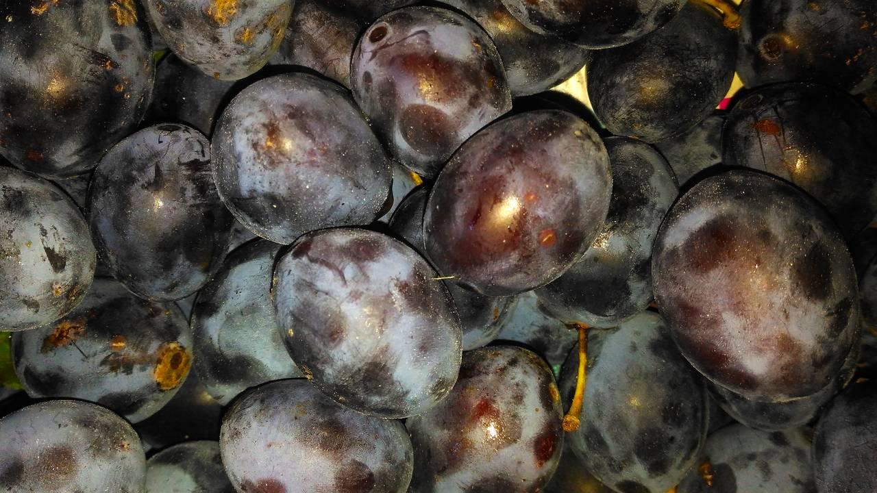 fruit10.jpg