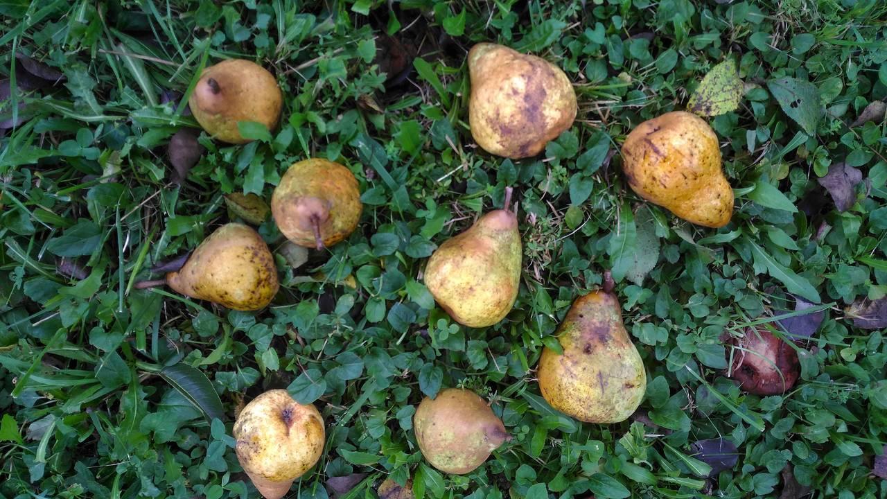 fruit6b.jpg